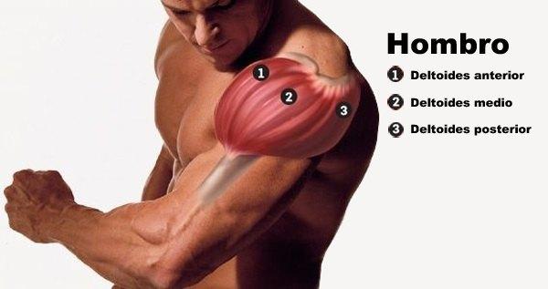 músculo deltoides